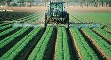 Nova Lei de Recuperação Judicial beneficia o produtor rural